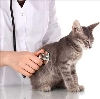 Ветеринарные клиники в Богатом